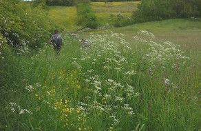 Flowery Footpath to Scale Beck
