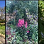 Open Garden Visit – Church Brough – 29 Sep 2018