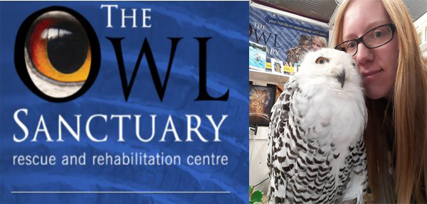 The Owl Sanctury