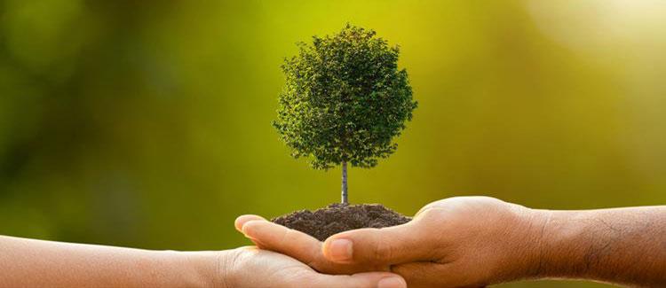 Tree Planting Logo