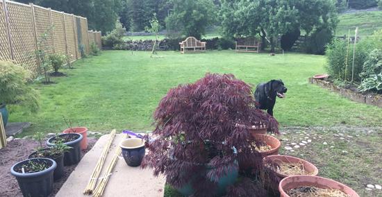 Jackie Frankish's Garden