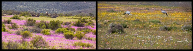 Wildflowers of South Africa 1&2