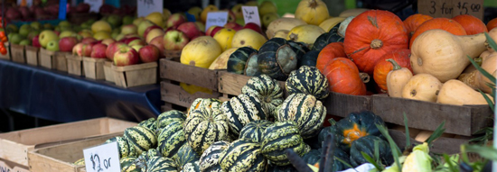 Vegetable Produce Harvest